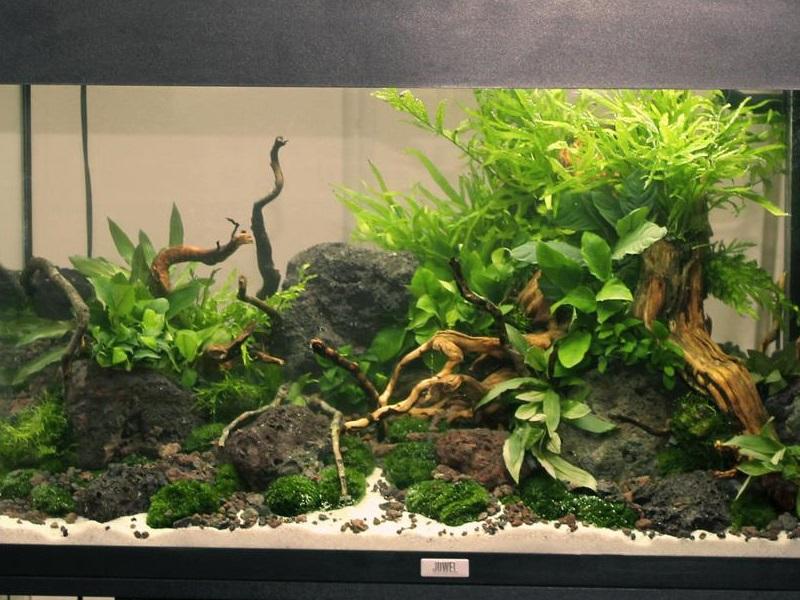 aquascaping natur aquarien topzoo paderborn. Black Bedroom Furniture Sets. Home Design Ideas